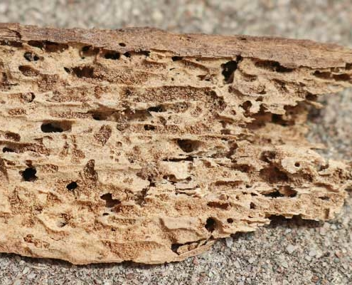 WDO Termite or Pest Inspection - wood showing termites