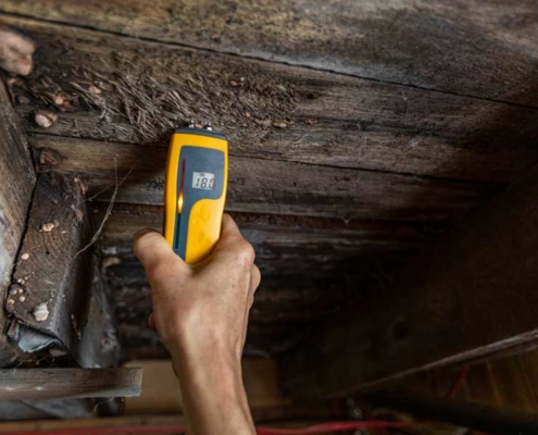 Home Inspection Mold detections
