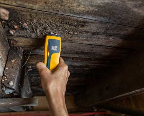 Mold detection with device