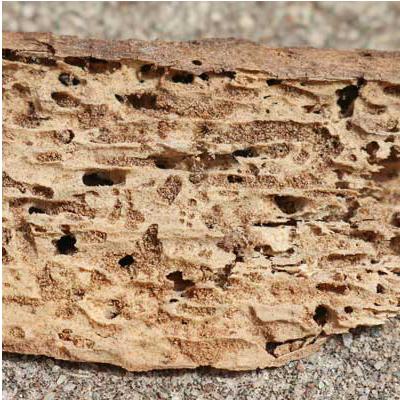 Termite WDO Report